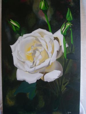 VERANO 2012 (Rosa Blanca)